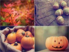 autumn photography   Tumblr
