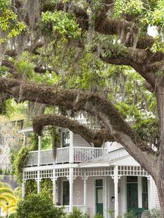 Historic Home with Spanish Moss-Covered Oak Tree, Fernandina Beach, Amelia Island, Florida, Usa Places In Florida, Old Florida, Florida Usa, Florida Home, Fernandina Beach Florida, Great Places, Places To Go, Amelia Island Florida, Mousse