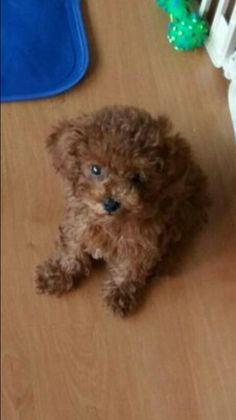 He looked like a little bear when he was a baby! It's so cute Bts Dogs, Min Holly, Cutest Babies Ever, Les Bts, Bts Pictures, Bts Wallpaper, Poodle, Holi, House Clipart