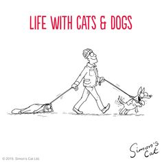 Going on holiday with your beloved pet – as much as it's something most of us would love to do – is usually a no-go Let's face it, the trouble of obtaining them a Canis familiaris Funny Cat Jokes, Funny Cats, Funny Animals, I Love Cats, Cool Cats, Simon Tofield, Simons Cat, Kitten Photos, Yorkshire Terrier Dog
