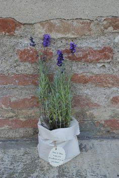 lavander wedding favor# Flower favor#  Lavanda plante marturii nunta http://www.dreamgardens.ro/plante-marturii/