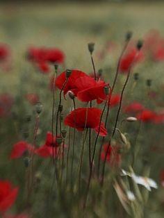 Lensbaby Erfahrungen - Glücksmomente Andrea Lück Andreas, Flowers, Plants, Plant, Royal Icing Flowers, Flower, Florals, Floral, Planets