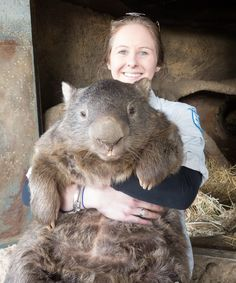Meet Patrick, the oldest known Wombat in the World! - Not sure of the correctness of having one of them as a pet, but I would surely love to cuddle him ;-)