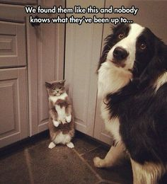 Cat & Dog Up To No Good