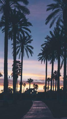 Evening with palm trees. evening with palm trees summer wallpaper phone, iphone wallpaper travel Summer Wallpaper, Tree Wallpaper, Wallpaper Backgrounds, Iphone Wallpaper, Nature Wallpaper, Beautiful Wallpaper, Print Wallpaper, Phone Backgrounds, Belle Photo
