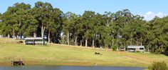 Spearwood Valley Donnybrook - dog friendly Farm Holidays, Great Walks, Bridgetown, Farm Cottage, The Donkey, Going On Holiday, Dog Friends, The Locals, Places To Go