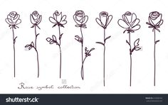 Roses. Collection Of Isolated Rose Flower Sketch On White Background. The Continuous Line Doodled Design. Стоковая векторная иллюстрация 414336163 : Shutterstock