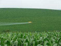 Uso de Fungicida no Milho Segunda Safra