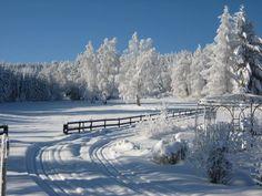 hirschenwies waldviertel Austria, Wanderlust, Snow, Outdoor, Hiking, Forests, Outdoors, Outdoor Games, The Great Outdoors
