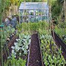 Cuidados en el huerto-jardín para el inverno
