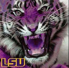 Geaux Tigers!!!