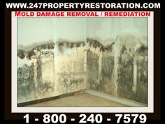Unfortunately, Mold usually starts in places you cannot see like under carpets, inside walls, on top of ceiling tiles, within pipes, underneath kitchen and bathroom sinks, refrigerators, around air-conditioner units, windows and duct-work are all some common places for mold to grow. Mold damage removal and remediation services in Orlando, we pay your deductible - 247 property restoration experts Our IICRC Certified Technicians can assess and perform mold testing, removal and remediation