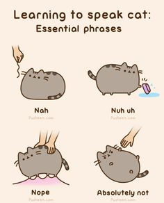 Learning to speak cat: essential phrases ~ with Pusheen the Cat [animated]
