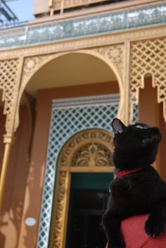 Cairo/Egypt