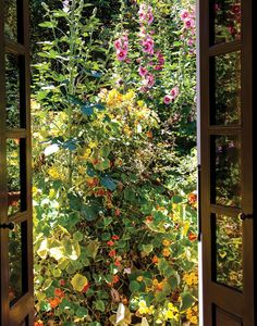 A tangle of 12-foot hollyhocks and twining nasturtiums bloom outside Madison Cox's library doors. (Photo: Oberto Gili)