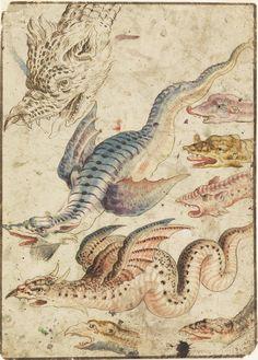 Study of a dragon, 1560-1600. Italy. Via Cooper Hewitt