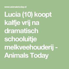 Lucia (10) koopt kalfje vrij na dramatisch schooluitje melkveehouderij - Animals Today