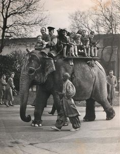 It was a very special treat, going to Belle Vue, An Elephant Ride at Belle Vue Gardens, Manchester
