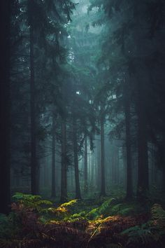 Forest - Into The Misty Forest - by Sven Quandt