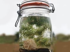 Tabletop Biosphere - One day, I am going to make this with my son. And it will be GRAND!