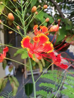 Flores, Miami