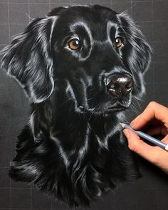 Aenna not quite finished yet, but already close to such an a hare flat lady. Aenna not fully finished, but almost such a Pencil Art Drawings, Realistic Drawings, Animal Drawings, Black Paper Drawing, Color Pencil Art, Pastel Art, Dog Portraits, Animal Paintings, Dog Art