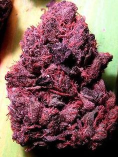 Purple / Red wow bud