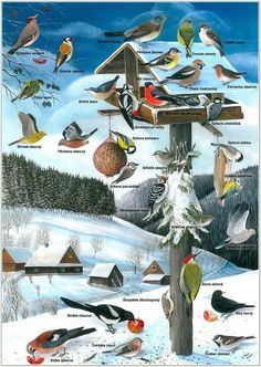 Science crafts for kids winter 54 new ideas Doki, Science Crafts, Farm Crafts, Winter Crafts For Kids, Australian Animals, Animal Posters, Beautiful Birds, Montessori, Drawings