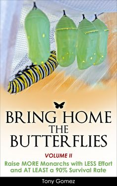 Raise More Monarch Butterflies with Less Effort and At Least a 90% Survival Rate. The Tips and Techniques in this Raising Guide will help you Raise Healthy Monarchs that you can Safely Release so they can start the next generation of Magnificent Monarch Butterflies. Are you Ready to Raise?