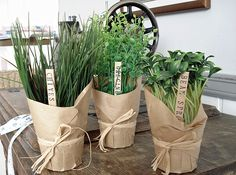 Herbs wrapped with kraft paper and twine. great for kitchen window sill in summe. Herbs wrapped with kraft paper and twine. great for kitchen window sill in summer. Herb Wedding, Vegetable Packaging, Kitchen Window Sill, Paper Pot, Herb Pots, Flower Pots, Flowers, Garden Gifts, Kraft Paper