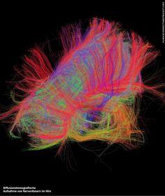 """#Connectome  http://www.humanconnectomeproject.org/  In der Gesamtheit aller neuronalen Verknüpfungen ist das Geheimnis der menschlichen #Individualitaet versteckt.  Sebastian #Seung """"Du bist Dein #Connectome"""" Lässt sich also irgendwann eine Kopie des menschlichen Geistes herstellen? Keine Angst, besser #einfach_eine_zweite_Meinung_einholen im #Lifecoaching http://www.deventhos.de/Berater/Norbert-Roerig-Psychologische-Beratung-Therapie-Coaching2"""