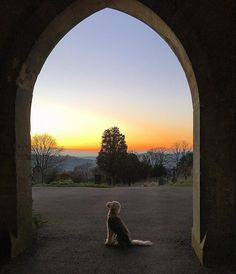 The sun  has gone to bed  and so must I   Good night all  #minigoldendoodle #minidoodle #doodledog #goldendoodle #clubdoodle #doods #doodletales #dogsofficialdog #dog_features #dogsofig #dogstagram #dogsofinstagram #ilovemydog #sendadogphoto #fluffydog #flufffeatures #doodlegram #minigoldendoodlesofinstagram #featureperfectpups #Bestphotogram_dogs #bestdog #bestwoof #lacyandpaws #thedogist #animalfeaturepics #doodleoftheday #dailyfluff #topdogphoto by zivadoodle