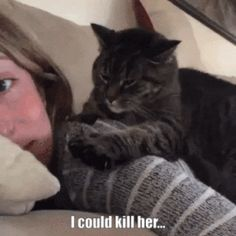 I Could Kill Her Cat Gif | Funny Pictures, Quotes, Pics, Photos, Images