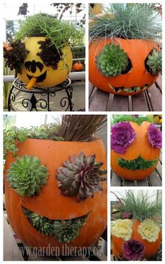 "Today at the garden center we saw these fabulous ""jack-o-planterns"" stuffed with various sedum and kale.  Great inspiration pieces for a weekend project.  Love! Update: Check out this tutorial on How to Make a Pumpkin Planter if you want to make your own."