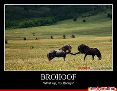 what up, my brony?