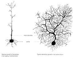 Thoughts dr caroline leaf toxic Dr. Caroline