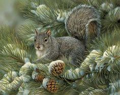 Gray Squirrel by Rosemary Millette  |  Wild Wings