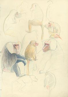 Mantelbavianen (baboons) sketch/ Zoo Antwerpen