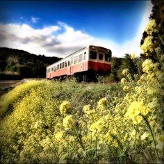 春鉄道 / Spring railway - @ue_mac- #webstagram Train Station, My Photos, Mac, Japan, Landscape, House Styles, Spring, Decor, Dekoration