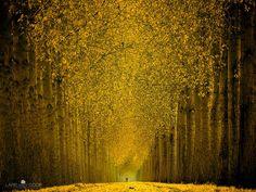 Fall on Fire Photo Forests - Photographer: Lars van de Goor