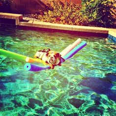 Wish Bailey were this chilled in the pool!