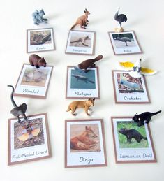 Will print these cards for camp Animals of Australia for the Montessori Wall Map & Quietbook with Printables from Imagine Our Life Montessori Classroom, Montessori Activities, Toddler Activities, Geography Activities, Montessori Elementary, Preschool Ideas, Australia For Kids, Australia Animals, Australia Crafts