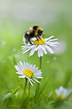 "(via ""Summer Collection""…..bee and daisy 