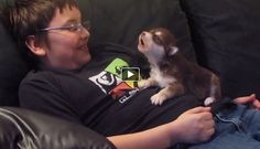 Alaskan husky puppy howling for the first time (VIDEO) | Best Animal Videos | PawBonito.com http://www.pawbonito.com/alaskan-husky-puppy-howling-for-the-first-time/