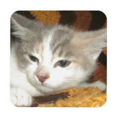 Little Girl Coasters!  #kitten #cat #zazzle #store #adorable #meow #fuzzy #gift #present #customize http://www.zazzle.com/conquestkitty*