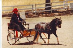 Reminds me of Mollie and our pony cart - loved to drive at an early age!
