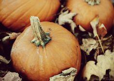 Pumpkin Spice by Jillian on Etsy