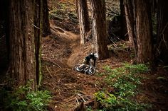 Riding among giants. Santa Cruz provided to be a spectacular place to ride for Aaron Gwin and his ASR Carbon. Be sure to check out the entire photo album.