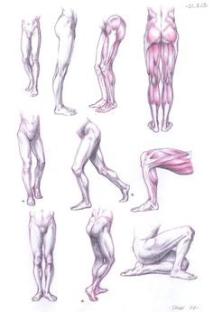 Anatomy Studies ✤ || CHARACTER DESIGN REFERENCES | キャラクターデザイン • Find more at https://www.facebook.com/CharacterDesignReferences if you're looking for: #lineart #art #character #design #animation #drawing #archive #reference #anatomy #sketch #artist #pose #gestures #how #to #tutorial #comics #conceptart #modelsheet #cartoon #legs #leg #heel #ankle #thigh #haunch #knees #quadriceps #calves #hamstrings || ✤