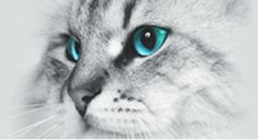 Katzenkrankheiten / Giardien / Kolloidales Silber / Probiotik